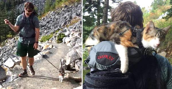 หนุ่มนักผจญภัยช่วยชีวิตแมวตาบอด และพาท่องเที่ยวพร้อมสัญญาว่าจะดูแลตลอดไป
