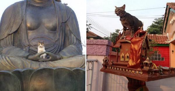 15 ภาพยืนยันว่าแมวเป็นสัตว์ที่คิดจะครองโลก เพราะไม่เกรงกลัวสิ่งศักดิ์สิทธิ์กันบ้างเลย