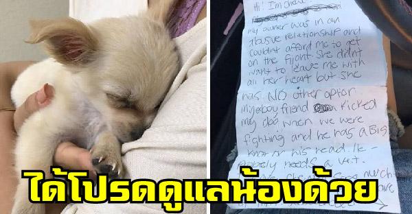ลูกสุนัขถูกทิ้งไว้ลำพังในสนามบิน พร้อมโน๊ตสุดเศร้าจากเจ้าของ ที่อ่านแล้วใจแทบสลาย