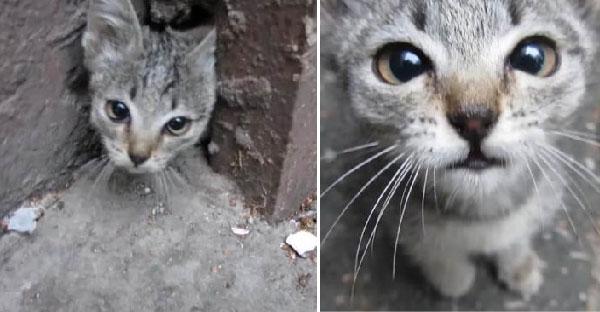 ชายหนุ่มได้ยินเสียงลูกแมวจึงเรียกมากินอาหาร ก่อนจะมีกองทัพมิ้วน้อยโผล่ออกมาเพียบ