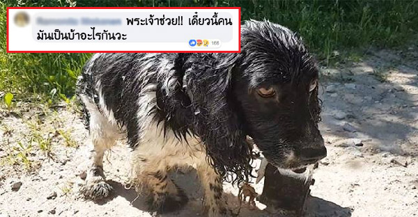 ชาวเน็ตรุมวิจารณ์กันดุเดือด!! หลังสาวพบสุนัขถูกมัดกับทุ่นเหล็กและทิ้งให้จมน้ำ