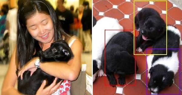หญิงสาวบังเอิญเจอลูกหมาที่เคยช่วยชีวิตไว้เมื่อหลายปีก่อนบนโลกออนไลน์