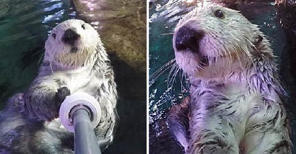 20 ภาพเซลฟี่อารมณ์ดีของสัตว์โลก ที่จะทำให้คุณอมยิ้มไปทั้งวัน