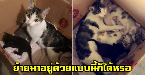 แมวจรจัดคาบลูกมาหนึ่งตัวแล้วจากไป ไม่นานก็คาบมาอีกเพียบ ย้ายมาอาศัยอยู่ด้วยเฉย