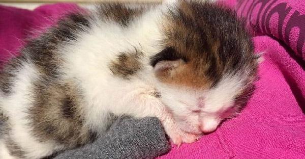 หญิงสาวช่วยลูกแมวจากถังขยะ ก่อนที่จะรู้ว่าเป็นแมวตัวผู้สามสีที่หายากมาก