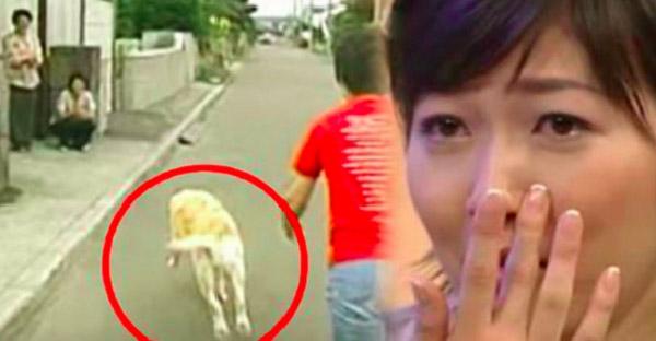 สุนัขนำทางได้กลับบ้านครั้งแรกในรอบ 10 ปี และนี่คือปฏิกิริยาสุดซึ้งที่ได้เจอเจ้าของเก่าอีกครั้ง