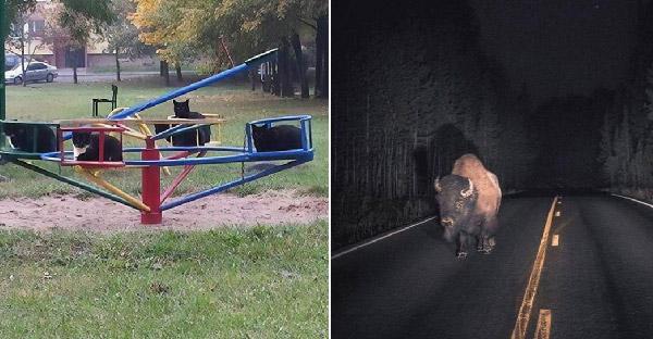 เหตุการณ์แปลกๆของสัตว์โลกชวนทึ่ง ที่เกิดขึ้นจากทั่วทุกมุมโลก