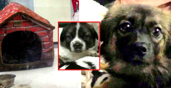 แม่หมาจรจัดคลอดลูก 5 ตัว และทุกตัวถูกขโมยไปเลี้ยงหมด โดยปล่อยแม่หมาต้องอาศัยอยู่ลำพัง