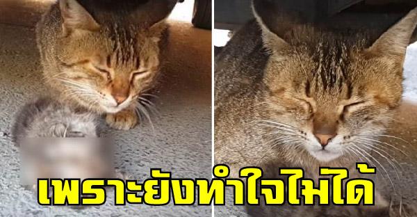 แม่แมวน้ำตาซึมเฝ้าลูกไม่ยอมไปไหน หลังทำใจไม่ได้ว่าลูกน้อยได้จากโลกนี้ไปแล้ว
