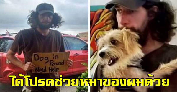 ชายไร้บ้านชูป้ายสุดสะเทือนใจขอร้องให้ช่วยหมาของเขา ที่เป็นเพื่อนแท้เพียงคนเดียวของชีวิต
