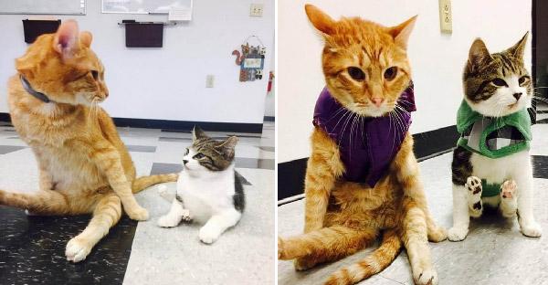 สองแมวป่วยอัมพาตพบกันในคลีนิค ก็เปลี่ยนชีวิตที่สิ้นหวังให้กลับมามีความสุขได้อีกครั้ง