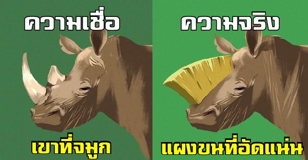 ความเชื่อเกี่ยวกับสัตว์โลกเหล่านี้ หลายคนอาจเข้าใจผิดมาตลอด