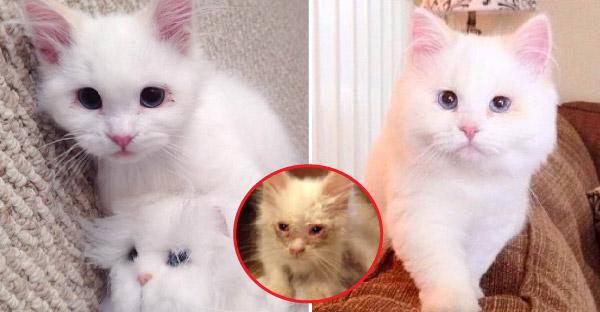 จากลูกแมวที่ไม่มีใครต้องการ ถูกช่วยเหลือจนกลายเป็นแมวที่ใครต่างก็พากันหลงใหล