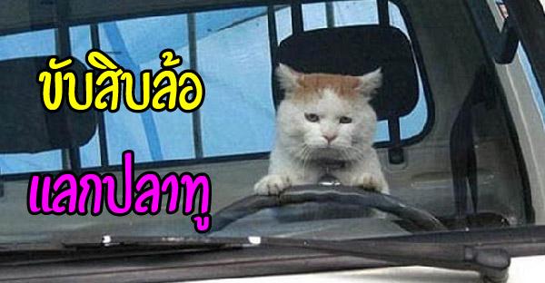 มัดรวมภาพหมา-แมวขับรถสุดฮา ที่เห็นแล้วจะต้องอมยิ้มอย่างแน่นอน