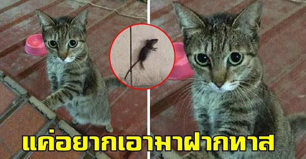 แมวหนุ่มคาบหนูตัวแรกในชีวิตมาให้เจ้าของ แต่เธอตกใจปิดประตูใส่ทันที