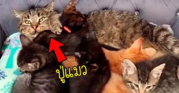 ปู่แมวที่เคยดุร้ายเปลี่ยนไปเพราะเจอหลานแมวตัวน้อยๆ
