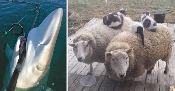 20 ภาพน่าสนใจของสัตว์โลก ที่เรียกเสียงหัวเราะจากชาวเนตมาแล้วทั่วโลก