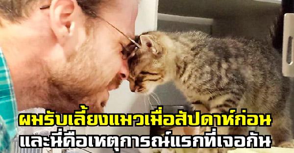 20 ภาพความน่ารักของเหล่าแมวเหมียว ที่ทำให้ประทับใจไม่รู้ลืม (^▽^)