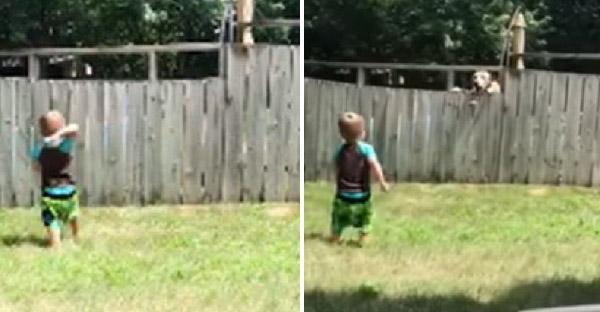 หนูน้อยวัย 2 ขวบเล่นปาบอลข้ามรั้วกับหมาข้างบ้าน ปาไปก็ปากลับมา เพลินกันล่ะงานนี้