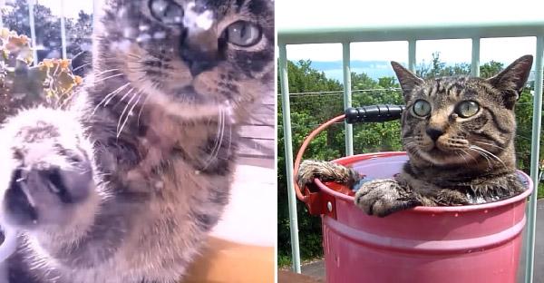 แมวพเนจรบังเอิญมาเจอทาสแมวเข้าอย่างจัง ปรนเปรอทั้งขนมทั้งน้ำให้อาบอย่างชิลล์
