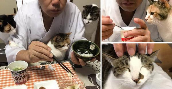 เจ้าอาวาสวัดญี่ปุ่นเลี้ยงแมวจรจัด และทำให้วัดกลายเป็นบ้านถาวรของพวกมัน