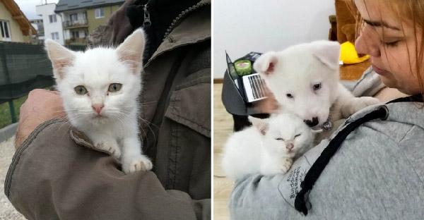 ครอบครัวตั้งใจรับเลี้ยงลูกแมวมาเป็นเพื่อนเล่นลูกหมา แต่ดูเหมือนลูกแมวอยากจะเป็นพี่เลี้ยงซะมากกว่า