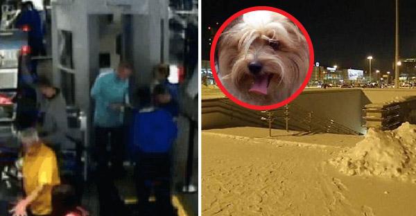 เจ้าของทิ้งสุนัขไว้นอกสนามบินท่ามกลางอากาศติดลบ กว่าจะหาพบก็สายเกินไปซะแล้ว