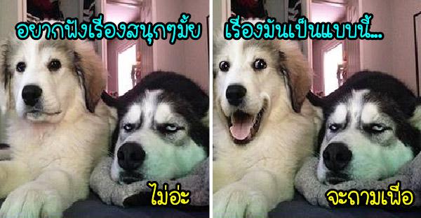 มัดรวมมะหมาอารมณ์ดีกับพฤติกรรมชวนเฮฮา ที่จะทำให้ยิ้มไปทั้งวัน