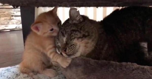 มนุษย์ไม่สามารถชนะใจแมวจรจัดดุร้ายได้ กระทั่งลูกแมวตัวน้อยช่วยปลดล็อกความเจ็บปวดในใจได้สำเร็จ
