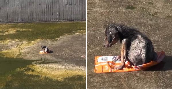 ทีมกู้ภัยช่วยเหลือหมาตัวน้อยถูกทิ้ง นั่งตัวสั่นอยู่ในคูน้ำที่แห้งแล้ง