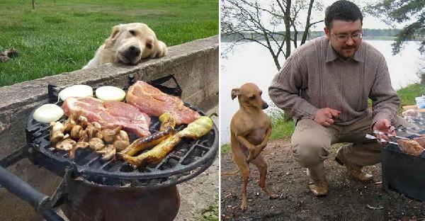 19 หมาน้อยอ้อนขอกินอาหารแบบน่ารักๆ ในแบบที่ไม่กล้าปฏิเสธได้เลย