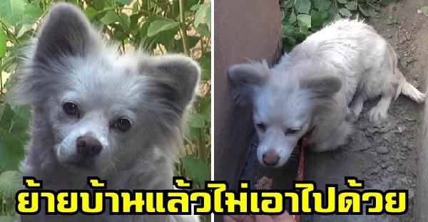 สุนัขผู้ซื่อสัตย์โดนเจ้าเก่งปล่อยไว้ไม่ไยดี หลังย้ายบ้านไปและทิ้งมันไว้เบื้องหลัง