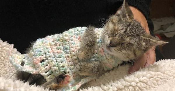 ลูกแมวตาบอดได้รับความอบอุ่นจากมนุษย์เป็นครั้งแรก แค่ใช้หัวใจสัมผัสก็เพียงพอแล้ว