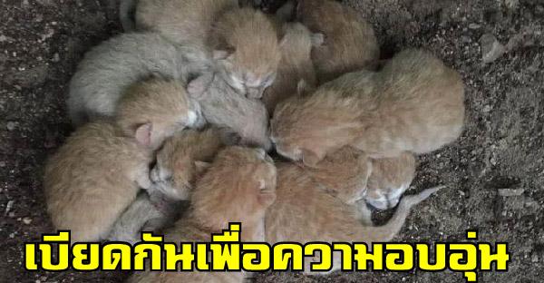 พลเมืองดีพบลูกแมว 8 ตัวถูกทิ้งอยู่ในสวนสาธารณะ ทุกตัวนอนเบียดกันเพื่อความอบอุ่น