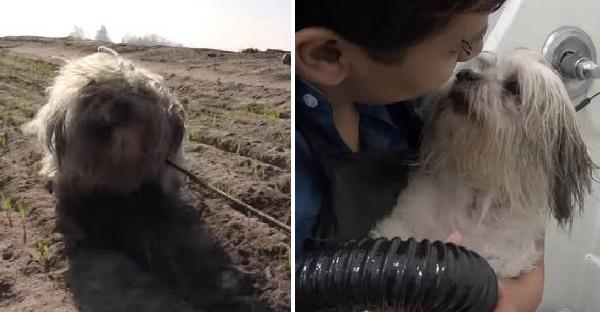 กู้ภัยสัตว์เปลี่ยนหมาจรจัดขี้กลัว ที่พยายามกัดทุกคนที่เข้าใกล้ ให้กลับสู่ปกติได้อีกครั้ง