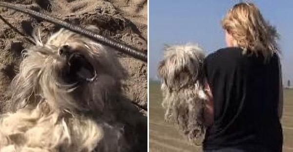 กู้ภัยสัตว์ไล่ตามจับหมาจรจัดขี้กลัวจนสำเร็จ หลังมันพยายามกัดทุกคนที่เข้าใกล้