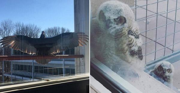 ชาวเนตแชร์ภาพนกแปลกๆริมหน้าต่าง ที่บังเอิญเจอแบบไม่ทันตั้งตัว