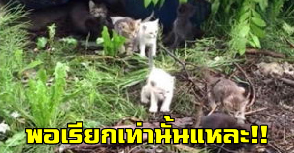 ลูกแมว 3 ตัวโผล่จากกองขยะ พอเรียกเท่านั้นแหละ กองทัพมิ้วน้อยก็เดินออกมากันเพียบ