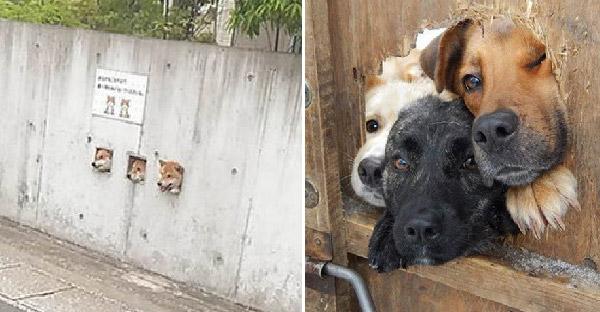 19 หมาน้อยที่โผล่มาทักทายได้น่ารักสุดๆ จนคนเห็นเป็นต้องยิ้มไปตามๆกัน