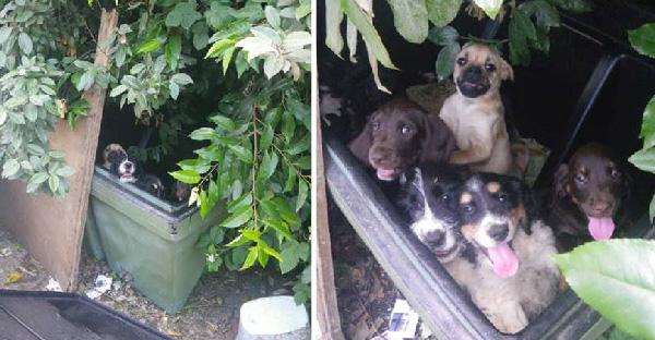 คนใจร้ายปล่อยลูกสุนัขเก้าตัวลงถังขยะ เพราะไม่สามารถขายพวกมันได้