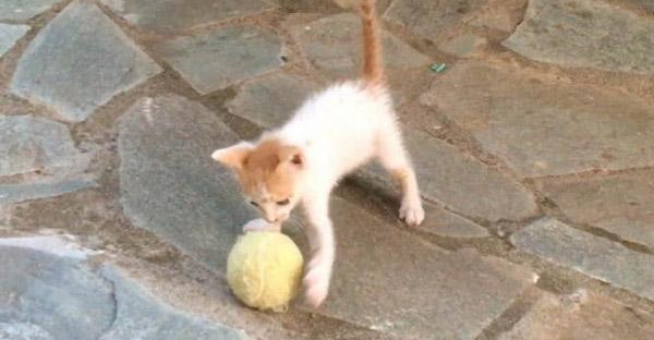 ลูกแมวจรจัดได้ลูกเทนนิสเป็นของเล่นชิ้นแรก และคู่รักใจดีก็ไม่ปล่อยให้มันโดดเดี่ยวอีกเลย