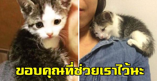 ลูกแมวกำพร้าปีนไหล่อ้อนแม่บุญธรรม ขอบคุณที่ช่วยชีวิตของมันเอาไว้