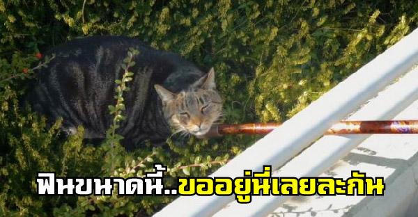 แมวปริศนาเดินเข้าบ้านพักคนชราแบบมึนๆ เจอไม้เกาคางไปฟินจนไม่ยอมไปไหนอีกเลย