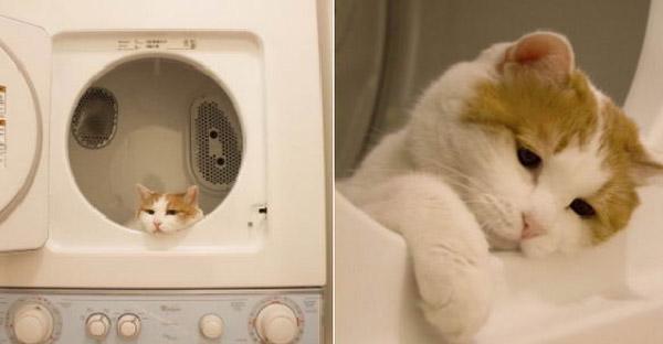 มัดรวมภาพแมวเหมียวอารมณ์มาเต็ม ดราม่าไม่แพ้มนุษย์เลยจริงๆ