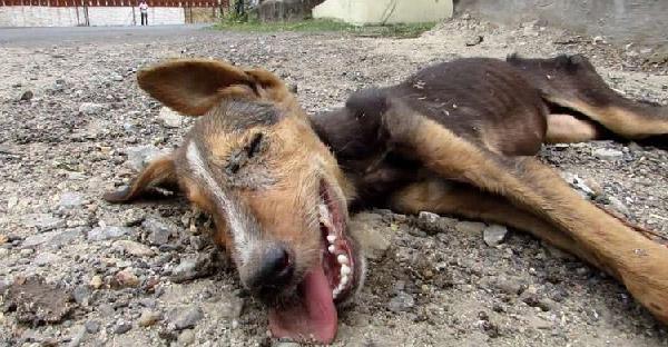สุนัขจรจัดบาดเจ็บไม่มีแรงขยับตัว แต่พอรู้ว่ามีคนมาช่วยก็กระดิกหางดีใจสุดแรง