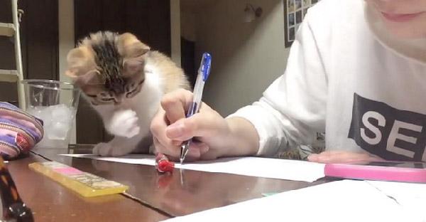 นักเรียนสาวเผยอาจทำการบ้านไม่เสร็จ เพราะเจ้าเหมียวก่อกวน