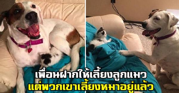 เพื่อนฝากให้เลี้ยงแมวแต่พวกเขาเลี้ยงหมา ก่อนจะรู้ว่าพวกมันเข้ากันได้ดีเว่อร์