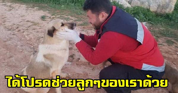 แม่หมาจรจัดเดินเข้ามาหากู้ภัยสัตว์ เพื่อขอร้องให้ช่วยลูกน้อยทั้ง 15 ตัวด้วย