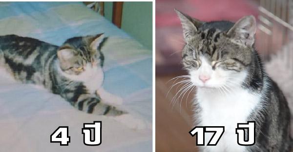หลังแมวหายตัวไปนาน 13 ปี เจ้าของก็ได้เจอแมวอีกครั้ง และสัญญาจะดูแลไปตลอดชีวิต