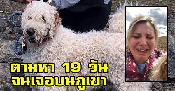 สาวประสบอุบัติเหตุจนหมาของเธอหายไป จึงออกตามหานาน 19 วันจนเจอบนภูเขา